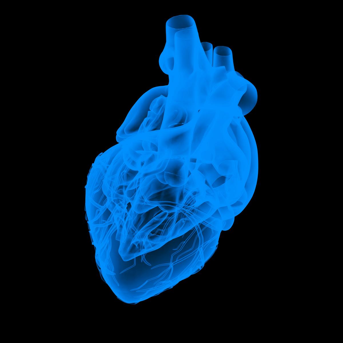 Sudden death warning over faulty gene British Heart Foundation