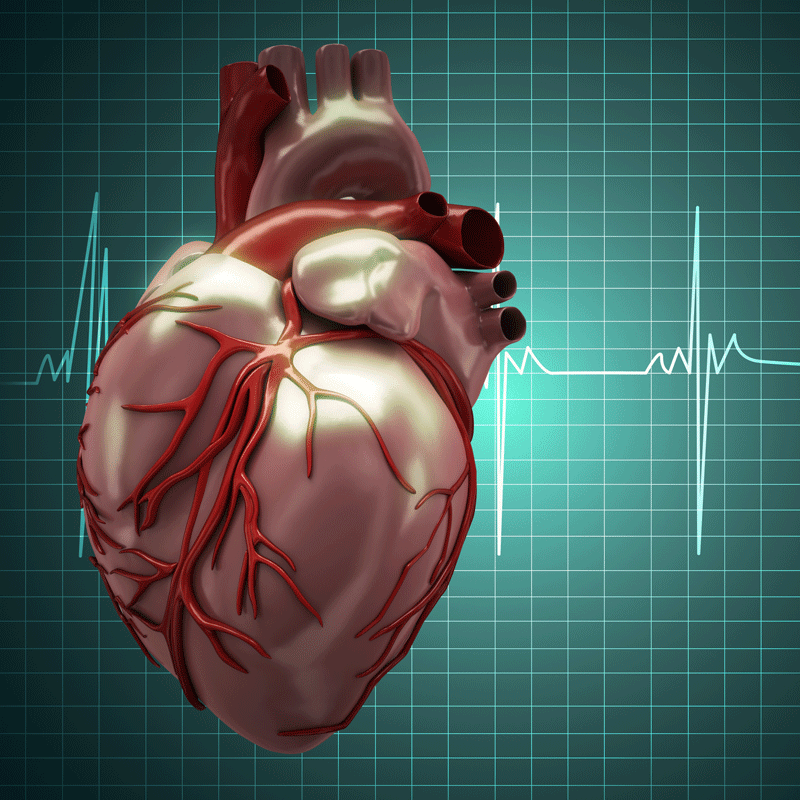Pericytes Potential to Reverse Heart Damage